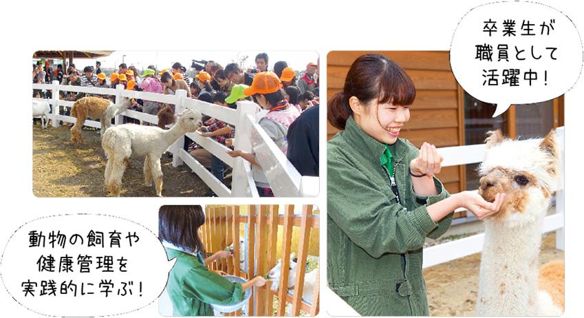 卒業生が職員として活躍中! 動物の飼育や健康管理を実践的に学ぶ!